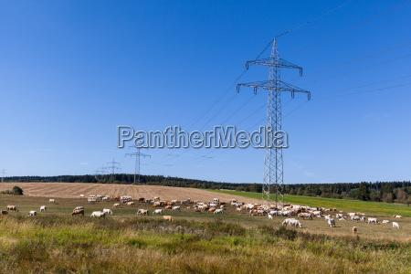 grid mast