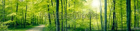 gruene waldpanorama landschaft