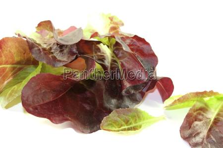 knackiger roter salat
