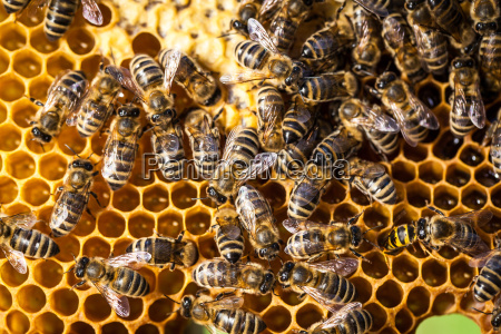 macro shot of bees swarming on