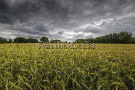 field and storm