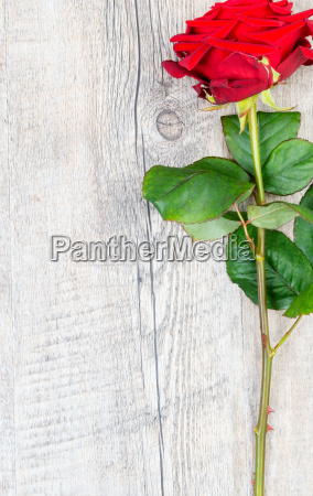 red rose placed on an antique