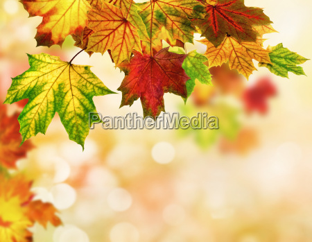 autumn leaves background with bokeh