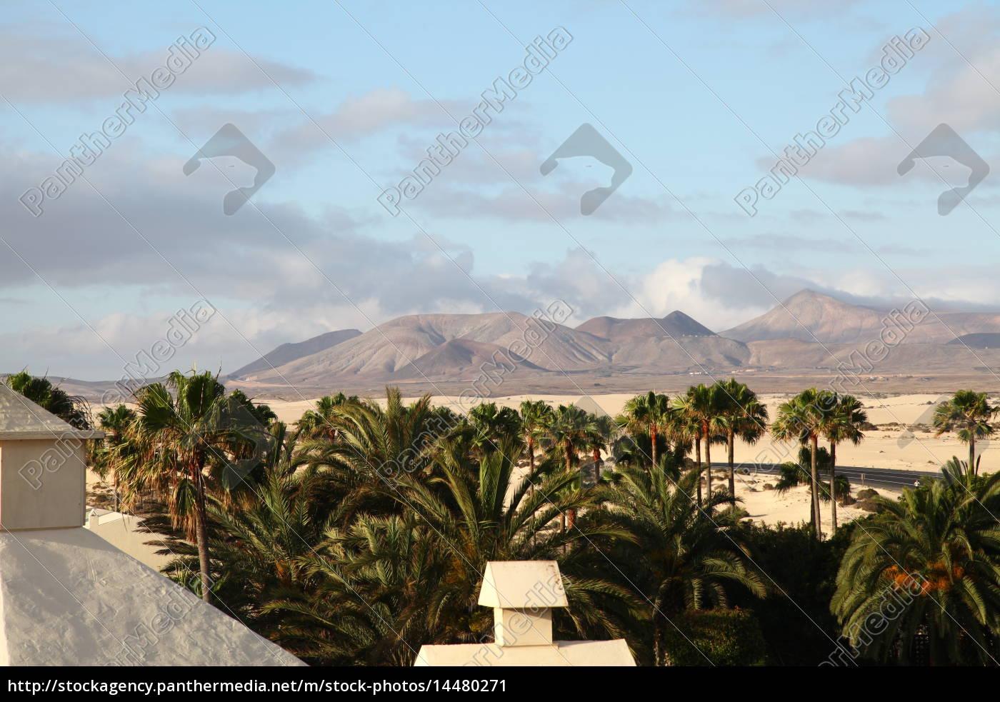 Fuerteventura, Kanarischen Inseln, Kanaren, Insel, Urlaub, Reise - 14480271