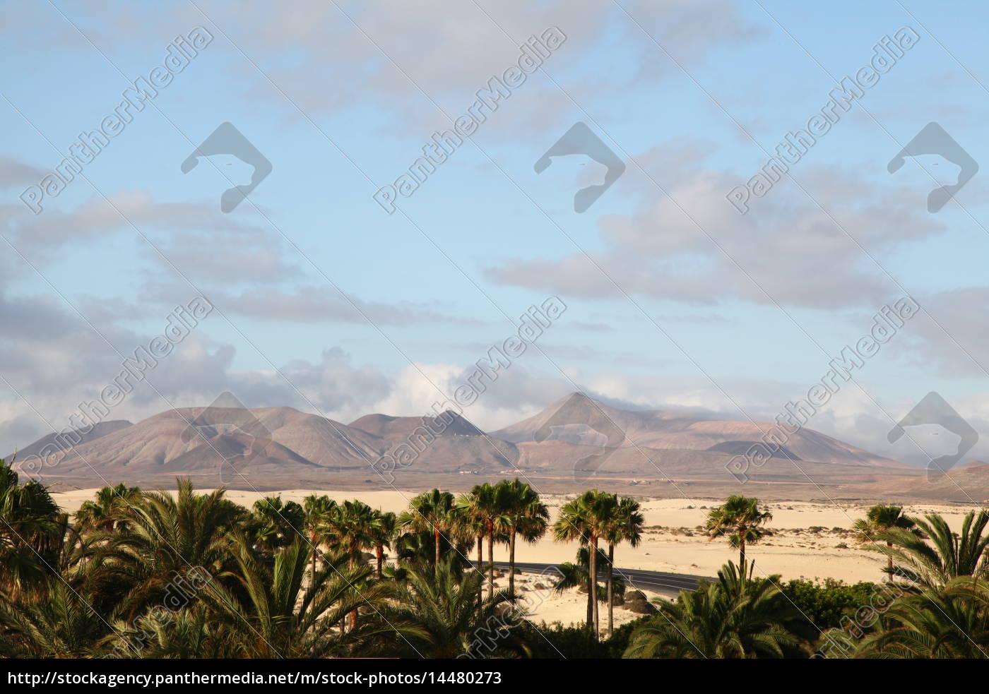 Fuerteventura, Kanarischen Inseln, Kanaren, Insel, Urlaub, Reise - 14480273