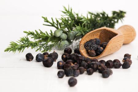 juniper pflanze mit beeren