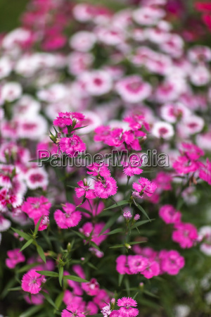 pinc young flowers growing in green