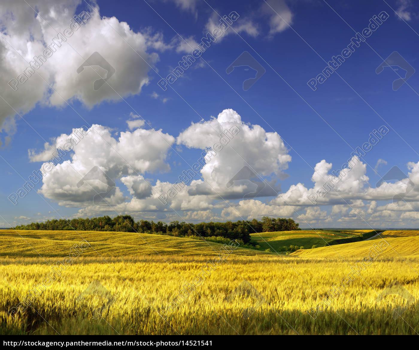 agrar, feld, im, sommer, tag - 14521541