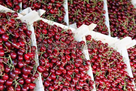 kirschen in kisten auf einem bauernmarkt
