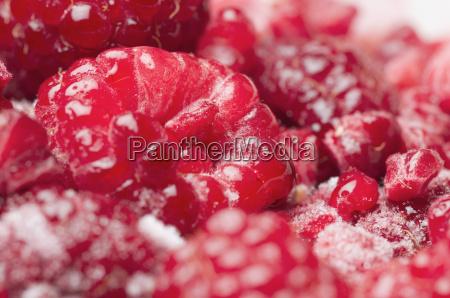 juicy raspberries