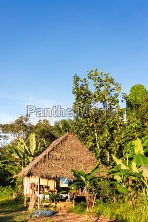 jungle shack vertical view