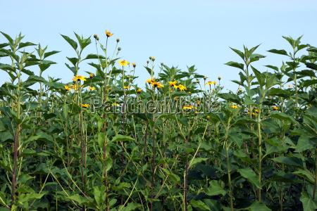 food aliment environment enviroment flower plant