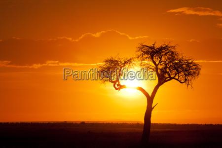 afrikanischen sonnenuntergang afrikanischen sonnenuntergang