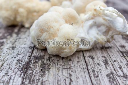 medicinal mushroom hericium on a wooden