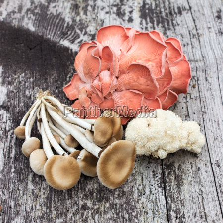 mushrooms on a wooden background