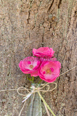 three pink rose petals in a