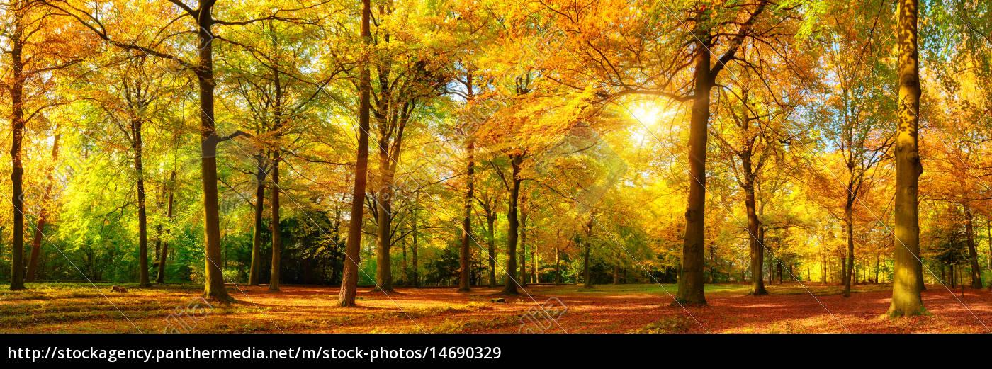 herbst, wald, panorama, im, goldenen, sonnenschein - 14690329