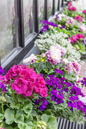 purple and pink summer flowers in
