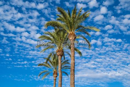 palmen unter wolkigem himmel