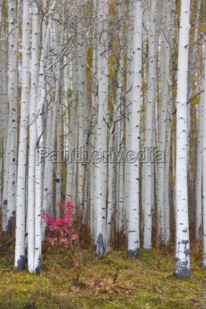 blatt baumblatt baum laubbaum usa outdoor
