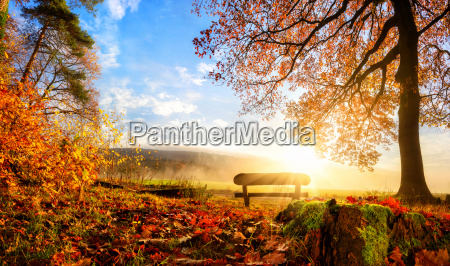 enchanting autumn scene