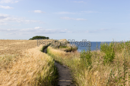 baltic landscape with hiking barley field
