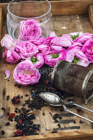 tea rose buds