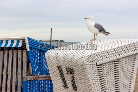 a seagull on a beach chair