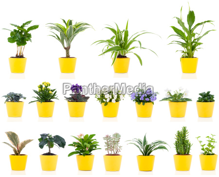 set of green house plants on