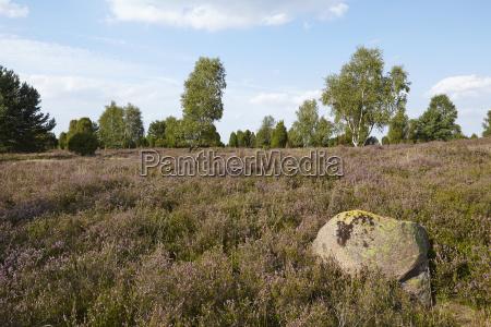 luneburg heath heathland