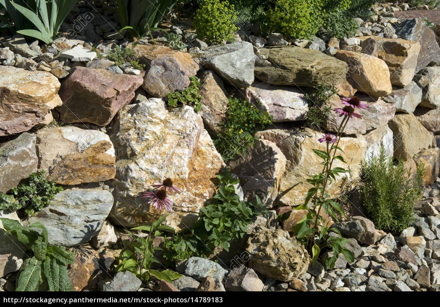 steingarten; trockenmauer; fuenf, monate nach - lizenzfreies bild