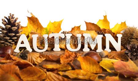 autumn lettering on dry leaves white