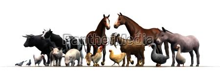 nutztiere auf weissem hintergrund