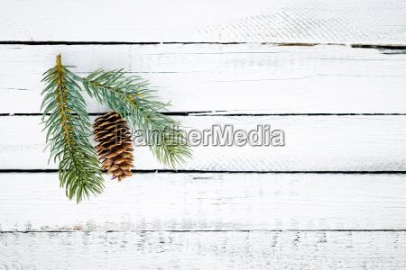 kegel und nadelbaum