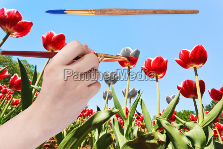 paintbrush paints tulip flowers in red