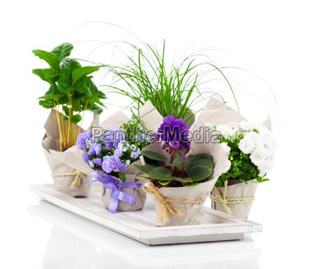 seedlings in paper packaging bluebells
