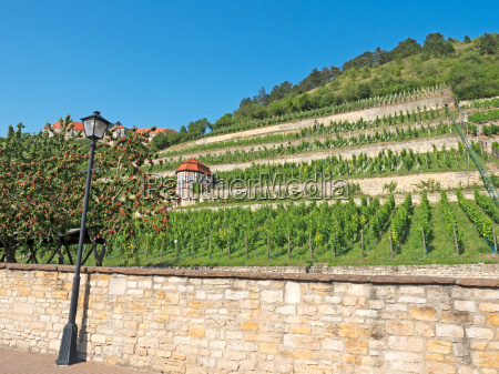 landscape in the wine area saale