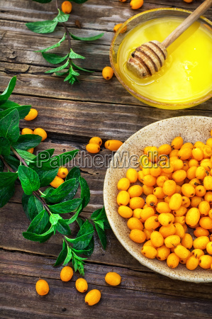 medicinal the decoction of buckthorn berries