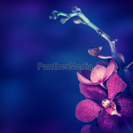 schoene orchideenblume