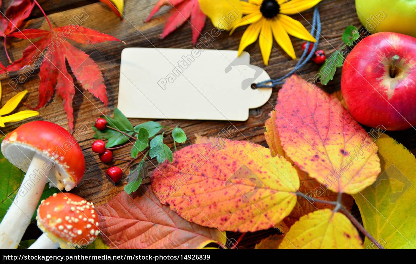 Herbst Hintergrund Stockfoto 14926839 Bildagentur Panthermedia