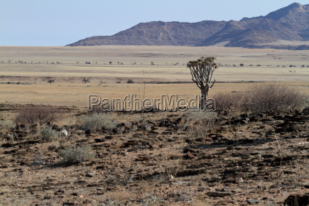 landschaft im namib naukluft nationalpark in