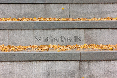 gray concrete stairs with yellow autumn