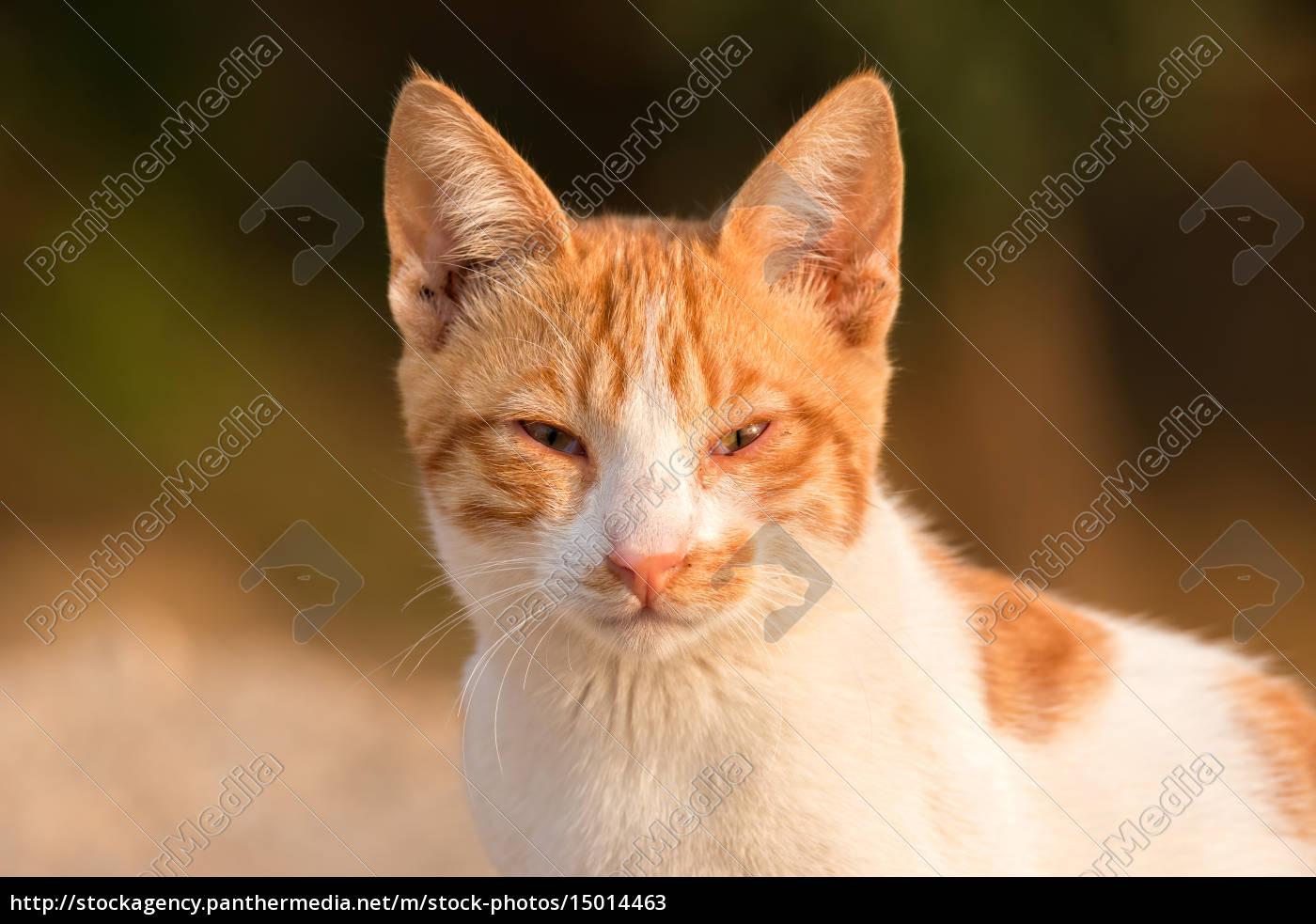 red, cat, portrait - 15014463