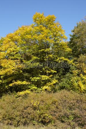 trees edge of a wood