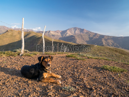 dog in the andes