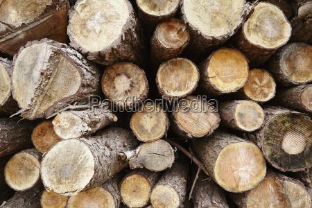amrum germany pile of tree