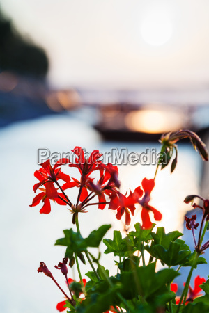 flowers illuminated by sunlight at dawn