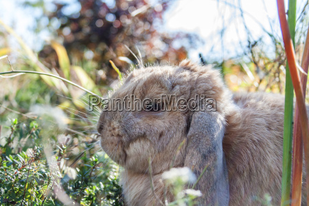 a domestic rabbits sitting in the