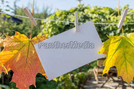 maple leaves with clothespins on a