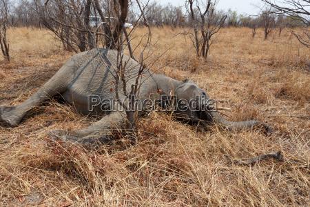 afrika elefant wildlife